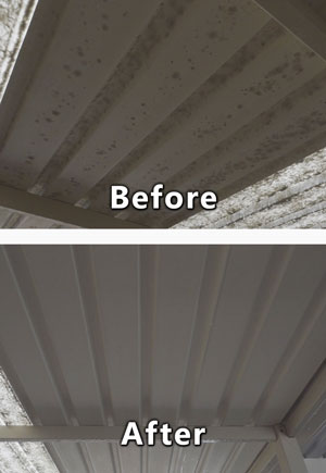Patio colorbond mould removal and cleaning